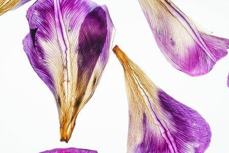 iris petals closeup Фото со стока