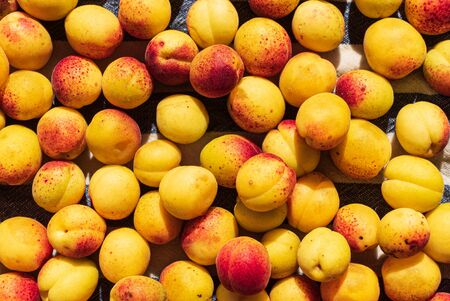 background of ripe organic apricots