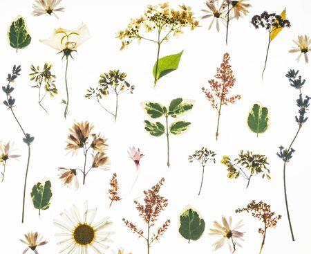 dry flowers on the white Фото со стока