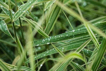 rain drops on the grass