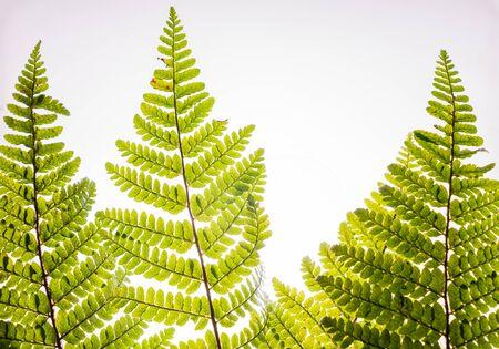 green leaf isolated on the white 版權商用圖片