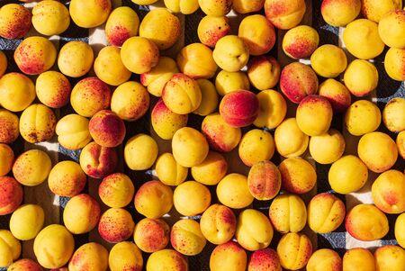 background of ripe organic apricots