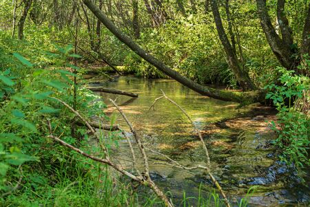 forest river with nice trees and plants