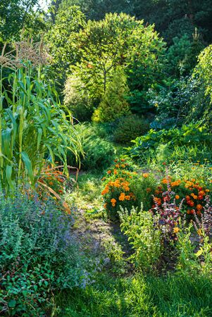 beautiful garden with flowers and vegetables
