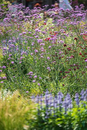 summer meadow with beautiful flowers