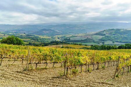 Vineyards In Autumn, Tuscany, Italy