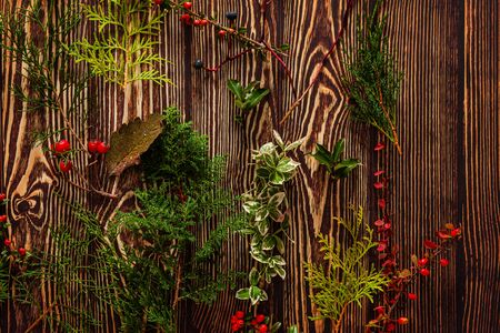 winter plants on the wooden background