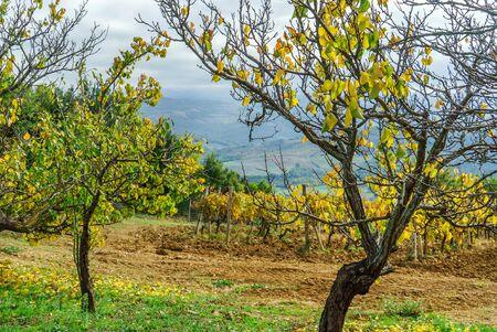 Vineyards In Autumn, Tuscany, Italy Reklamní fotografie - 131241572