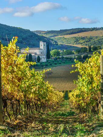 Vineyards In Autumn, Tuscany, Italy  Reklamní fotografie