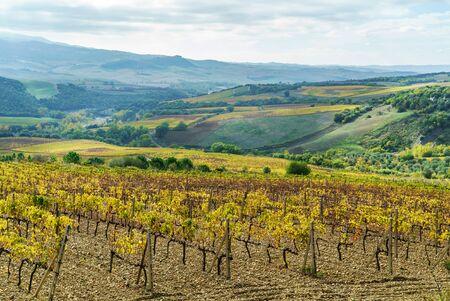 Vineyards In Autumn, Tuscany, Italy Reklamní fotografie - 131245472
