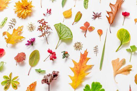 Autumn Flat Lay on the White