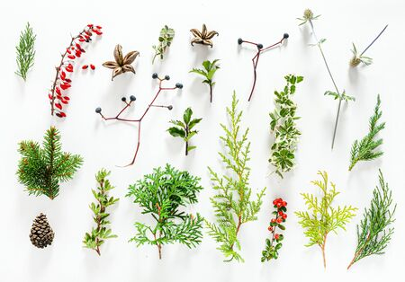 winter  plants on the white background