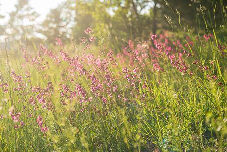 Summer meadow with pink flowers 스톡 콘텐츠 - 134167660