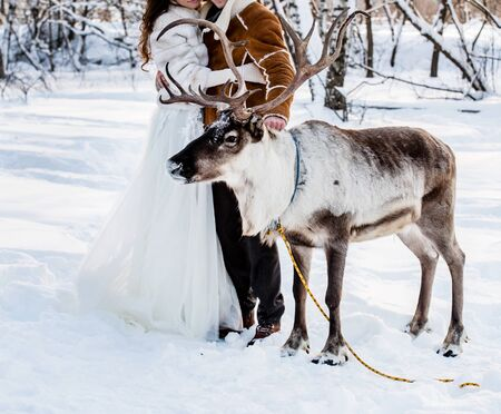 A deer stands next to the bride and groom
