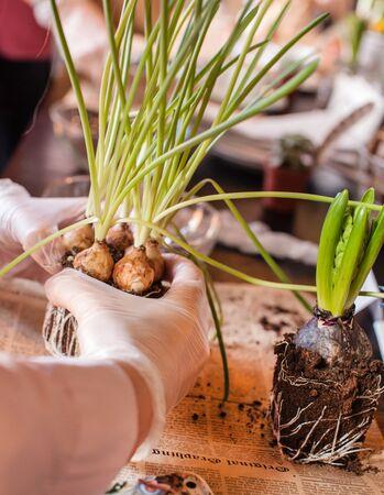 Gardener planting spring flower 版權商用圖片 - 135211978
