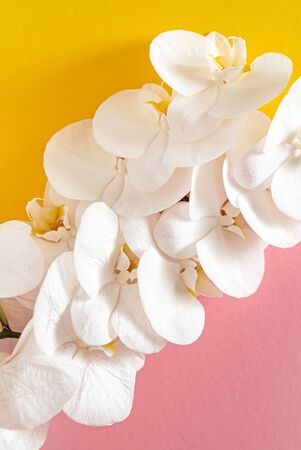 fresh white orchid on the color background
