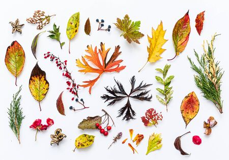 autumn leaves and berries on the white background
