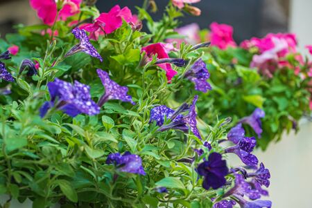 nice flowers in the containers Stock Photo