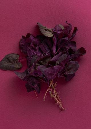 fresh purple orach 免版税图像