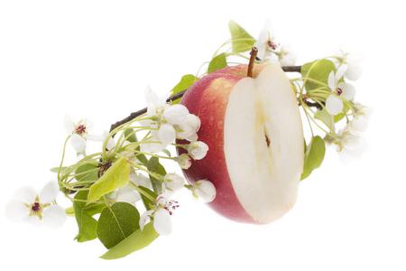 Apple in decor of apple blossoms - cut in half