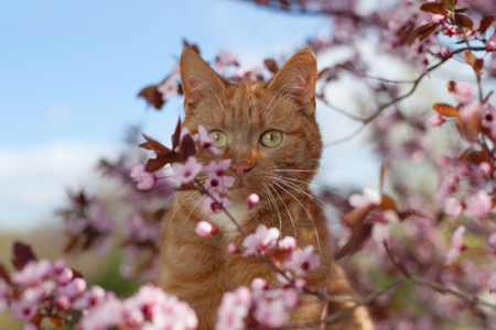 Red cat in flowers