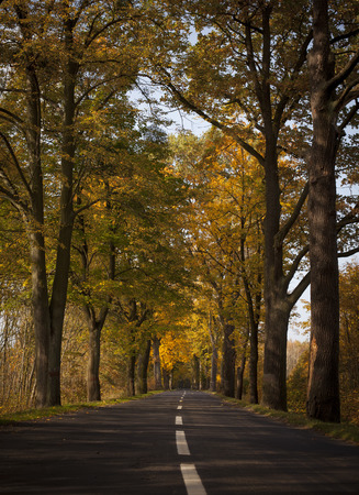 Autumn road - forest Imagens