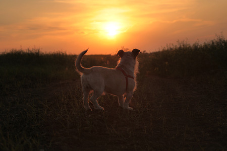 Dog watching sunset. Stock Photo