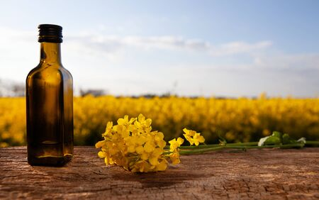 Bottles with natural rapeseed oil, nature. Rapeseed oil (canola) against the sky and field. Standard-Bild