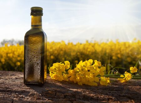 Fresh rapeseed oil in a bottle -natural medicine. Bottle of rapeseed oil (canola) and rape flowers bunch on table.