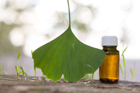 Medicinal herb ginkgo biloba. Healthy concept Banque d'images