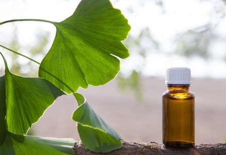 Medicinal herb ginkgo biloba. Healthy concept. Banque d'images
