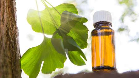Ginkgo biloba essential oil - beauty treatment.