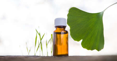 Ginkgo essential oil - horizontal banner, copy spece for text.