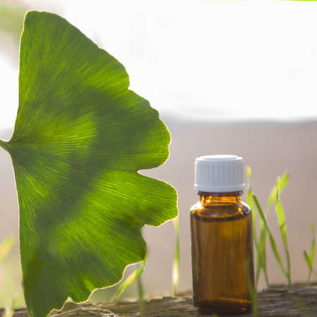 Extract and ginkgo biloba BIG leaves. Banque d'images