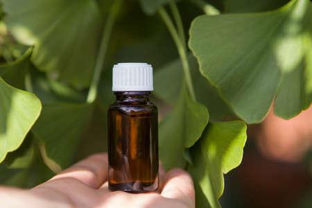 Ginkgo Biloba Tree Leaves - alternative medicine.