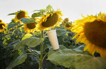 Cup with a straw and a sunflower flower, concept.