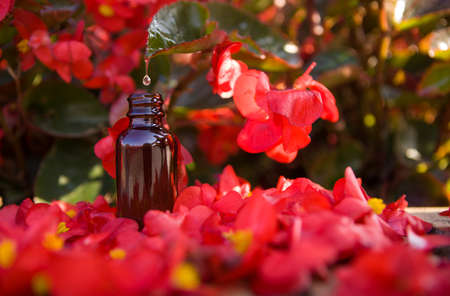 Dropper bottle with flower essence on beautiful red flowers. BACH thrapy.