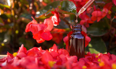 Essential oils with dropper above bottle. Organic bio alternative medicine oil falling from glass dropper, brown smal bottle.