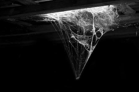 黒い背景にクモの巣します。