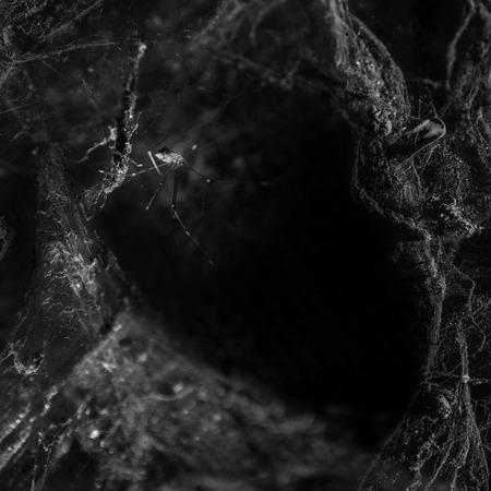 lightbeam: Cobweb and Spider on black background