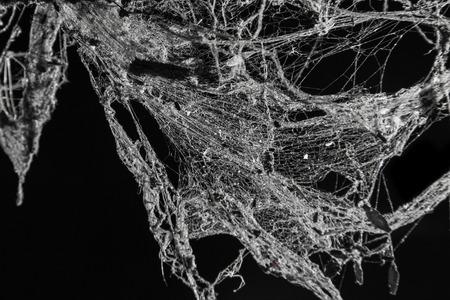 死ぬために蜘蛛の巣トラップに多く死んでる虫黒い背景に分離された古代タイの家でクモの巣やクモの web