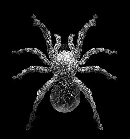 arachnids: Tarantula spider in cobweb form.It Isolated on black ,give feeling creepy haunted