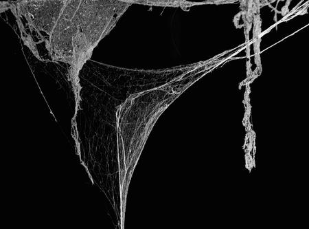 Horreur Résumé araignée piège web et mourir notion Banque d'images - 42101973