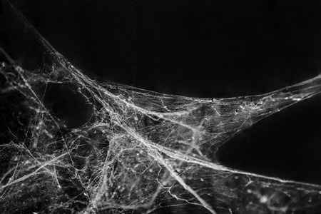 Abstract Spider web cobweb on black background