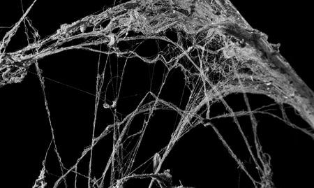 lightbeam: horror abstract cobweb for dark holloween background