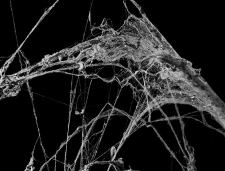 lightbeam: cobweb or spider web isolated on black background in ancient thai house Stock Photo