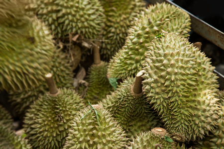 durian fruit after harvest orchard in thailand