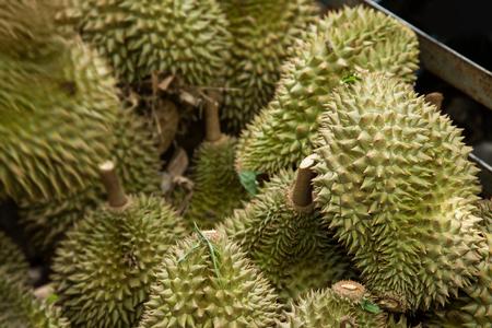Durian fruit na de oogst boomgaard in Thailand