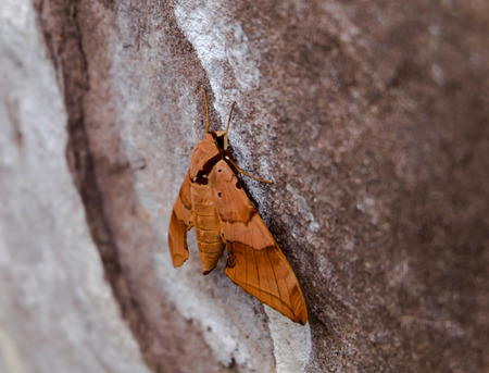 moth: moth on cliffs