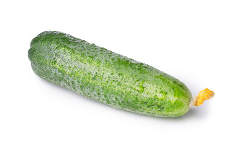 freshly picked: Freshly picked organic cucumber.
